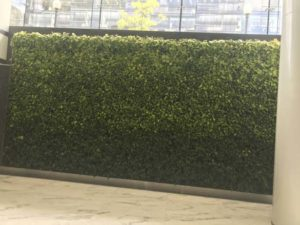 Living Walls Provide a Stunning Focal Point and Incredible Environment, Health and Financial Benefits